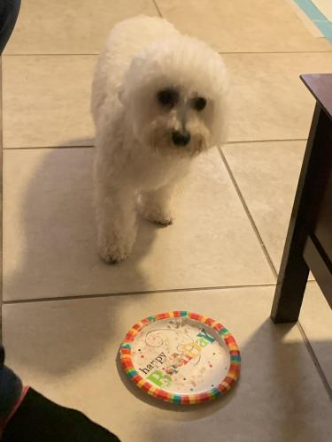 Lost Male Dog last seen Biscayne 10st , Miami, FL 33136