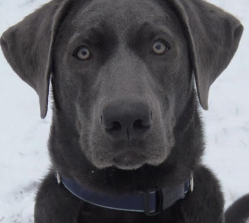 Lost Female Dog last seen Torrance Blvd and Crenshaw , Torrance, CA 90503