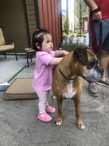 Lost Female Dog last seen Cottage Lake Safeway, Woodinville, WA 98077