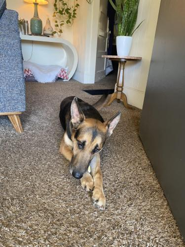 Found/Stray Male Dog last seen 4th street and Redondo ave, Long Beach, CA 90804