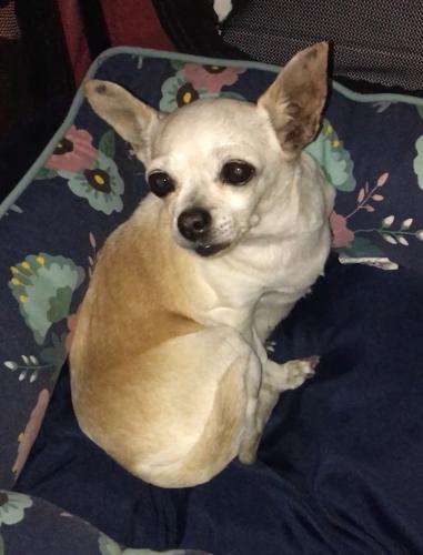 Found/Stray Unknown Dog last seen Garey Ave, Pomona, Pomona, CA 91767