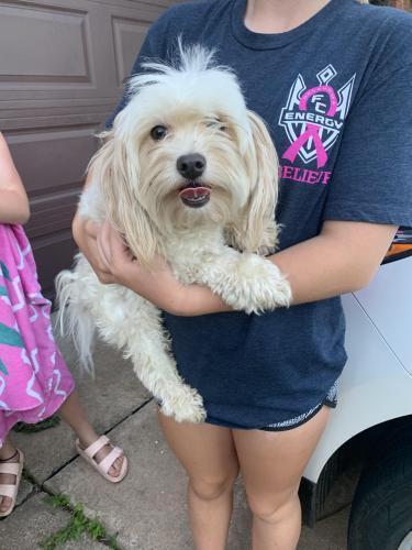 Found/Stray Male Dog last seen 9th and Boulevard Edmond, Edmond, OK 73034
