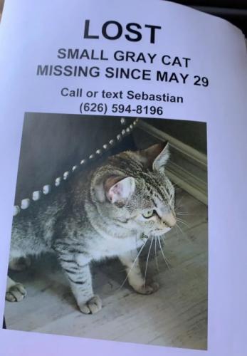 Lost Female Cat last seen Mullaghboy , Kilnaleck , Glendora, CA 91741