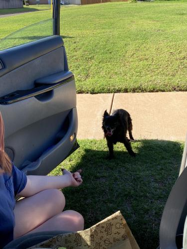 Found/Stray Male Dog last seen 157th and Penn, Edmond, OK 73012