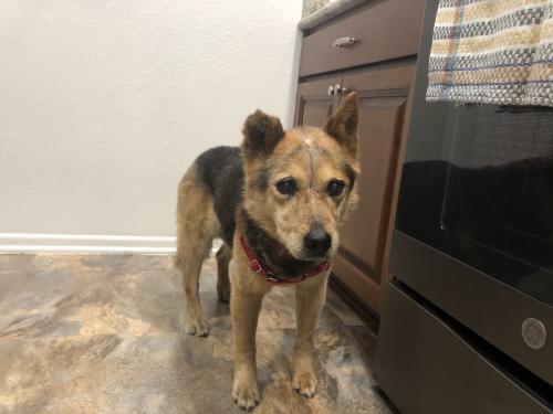 Found/Stray Female Dog last seen Broadway and Avenue B, San Antonio, TX 78215
