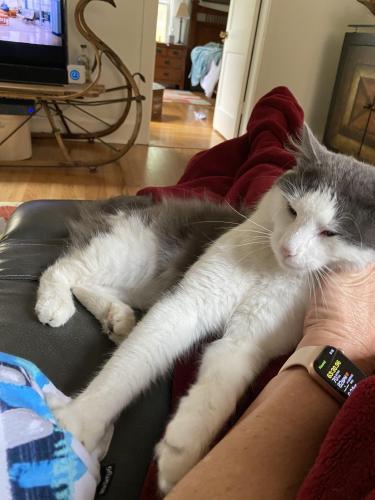 Found/Stray Male Cat last seen 8TH Bay St., E Ocean View Ave Norfolk, Norfolk, VA 23518