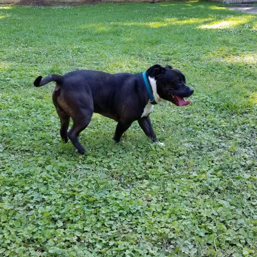 Found/Stray Male Dog last seen Thole Street, Norfolk, VA 23505
