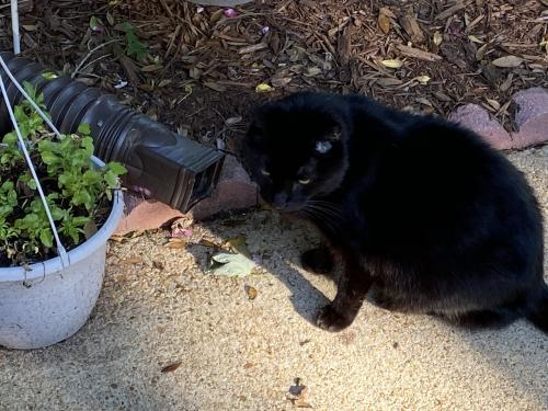 Found/Stray Unknown Cat last seen Warwick Blvd and Sweetbriar drive, Newport News, VA 23606
