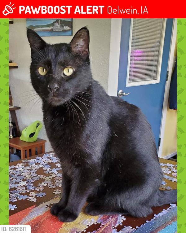 Lost Male Cat last seen Maplewood Drive in NW Oelwein, IA, Oelwein, IA 50662
