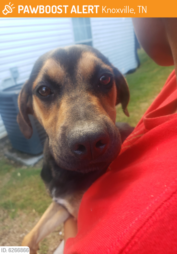 Rehomed Female Dog in Knoxville, TN 37909 (ID: 6266866 ...