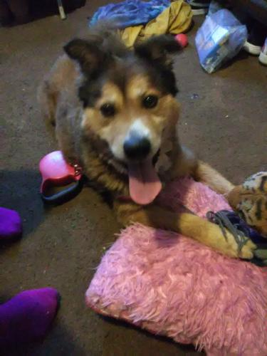 Lost Male Dog last seen Jefferson Street, Portsmouth, VA 23704