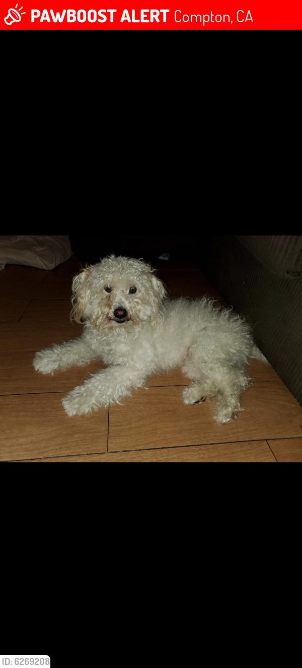 Lost Male Dog last seen Long Beach Blvd and tucker, Compton, CA 90221
