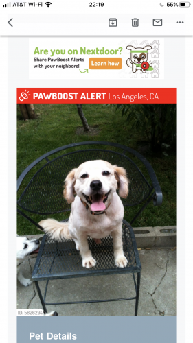 Lost Male Dog last seen Venice and Hoover , Los Angeles, CA 90006