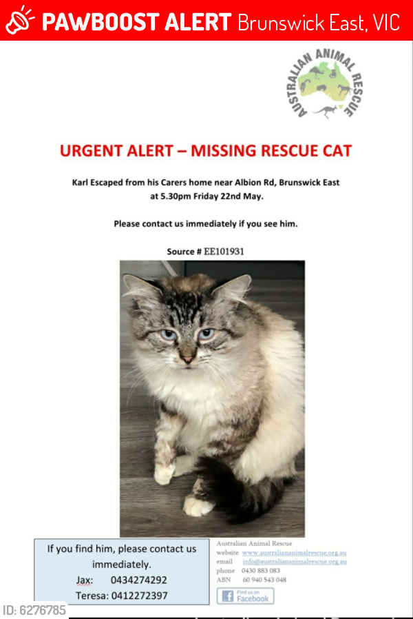 Lost Male Cat last seen Russian Christian Church, Brunswick East, VIC 3057