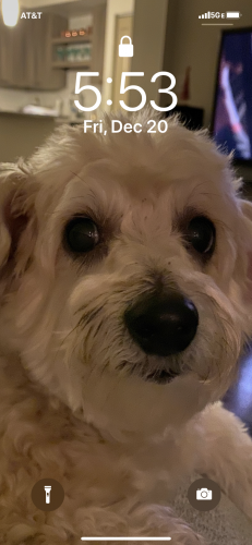 Lost Female Dog last seen 3475sw 9 terr  near Rex Fabric, Miami, FL 33134
