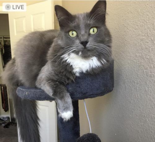 Lost Female Cat last seen 94th Place and Via Linda, Scottsdale, AZ 85260