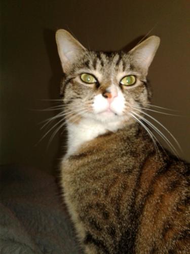 Lost Male Cat last seen Gunn Hall Drive and General Booth Blvd., Virginia Beach, VA 23454