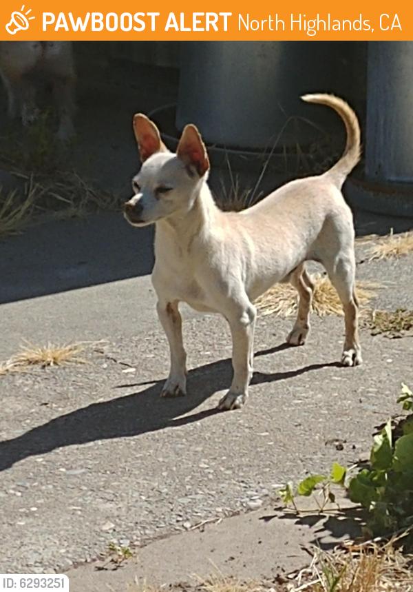 Rehomed Male Dog last seen Myrtle/Jackson, North Highlands, CA 95660