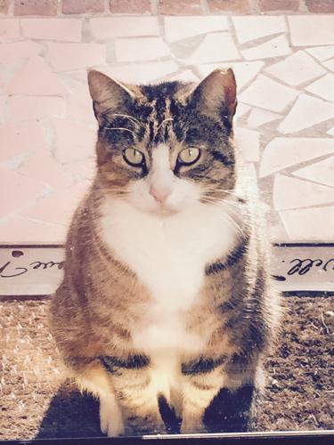 Lost Male Cat last seen Friendship Veterinary , Norfolk, VA 23505