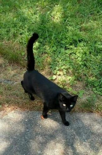 Lost Male Cat last seen Bayview and Capeview Avenue , Norfolk, VA 23503