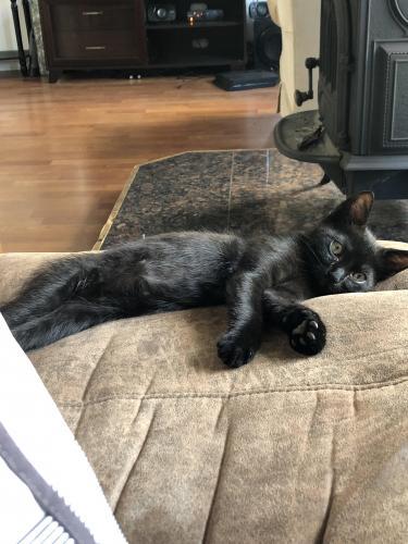 Lost Male Cat last seen 64-5163 Kinohou Street Waimea, HI 96743, Waimea, HI 96743
