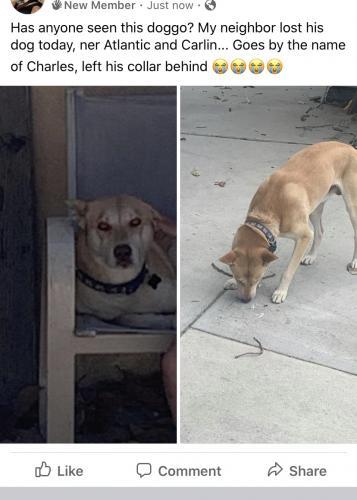 Lost Male Dog last seen Atlantic Cardwell , Lynwood, CA 90262