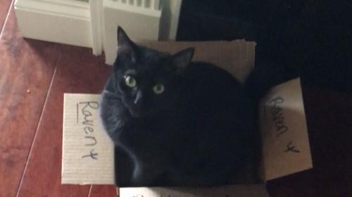 Lost Female Cat last seen W Bee Rock Rd., Flintstone , Walker County, GA 30725