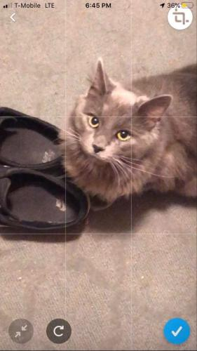 Lost Female Cat last seen Bayview area, Fisherman road , Norfolk, VA 23503