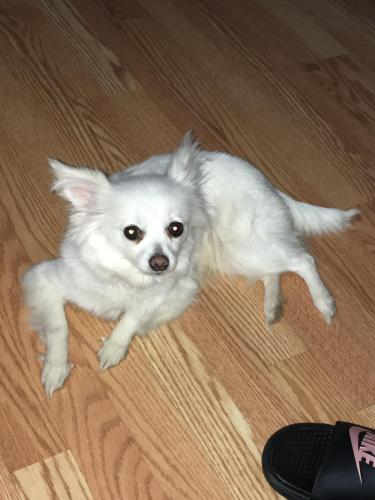 Lost Female Dog last seen Ranstad court Virginia Beach, VA , Virginia Beach, VA 23453