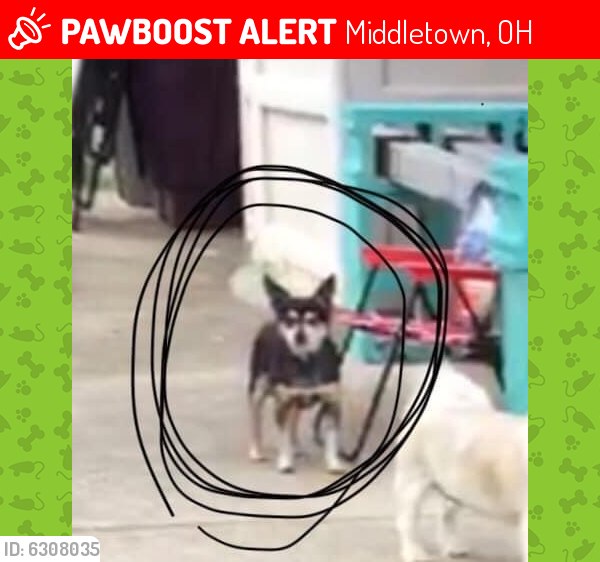 Lost Female Dog last seen Route 4 and Trenton Franklin Road, Middletown, OH 45042