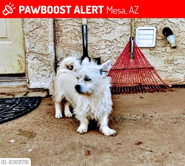 Lost Female Dog last seen Center & Mclellen, Mesa, AZ 85201