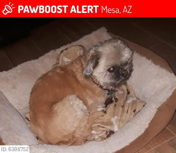 Lost Male Dog last seen N Recker Rd and Adobe, Mesa , Mesa, AZ 85205