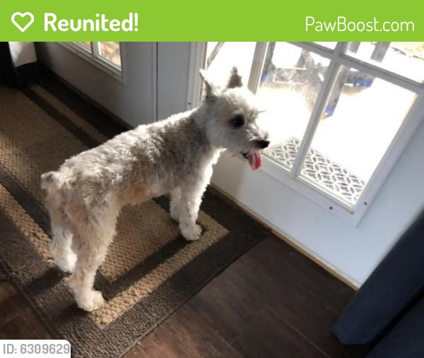 Reunited Female Dog last seen Greenbrook drive Arlington TX 76016, Arlington, TX 76016