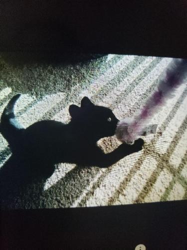 Lost Female Cat last seen Plank Road, Appleton, WI 54915
