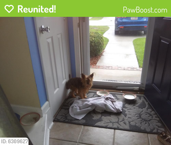 Reunited Unknown Dog last seen Silver lake area, Wilmington, NC 28412