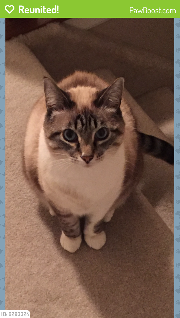 Reunited Male Cat last seen West Chester Rd/ Sussex , West Chester Township, OH 45069