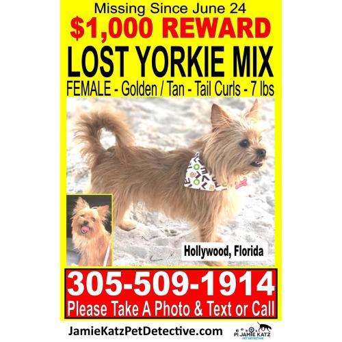 Lost Female Dog last seen Near Avenue , Hollywood, FL 33020