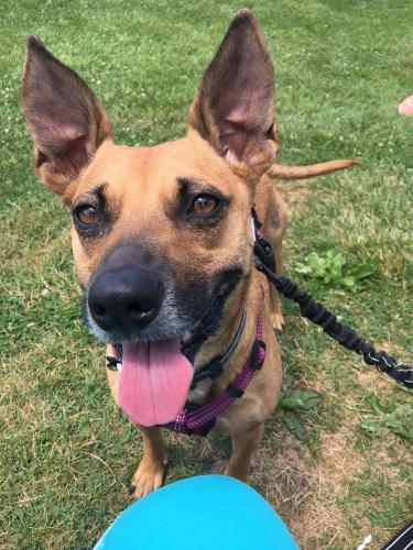 Lost Female Dog last seen Groff Mills Park, Harleysville, PA 19438