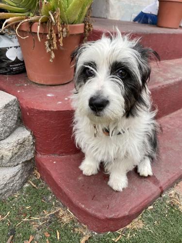 Found/Stray Female Dog last seen Pch and Magnolia in Long Beach, Long Beach, CA 90806