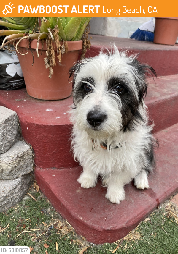 Found/Stray Female Dog last seen Pch and Magnolia in Long Beach, Long Beach, CA 90806