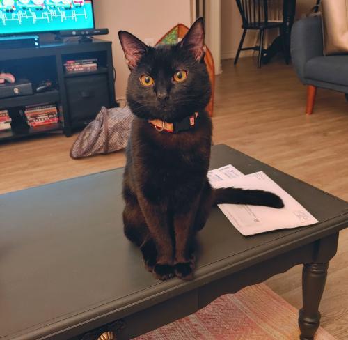 Lost Male Cat last seen Highway 49, Burlington, NC 27217