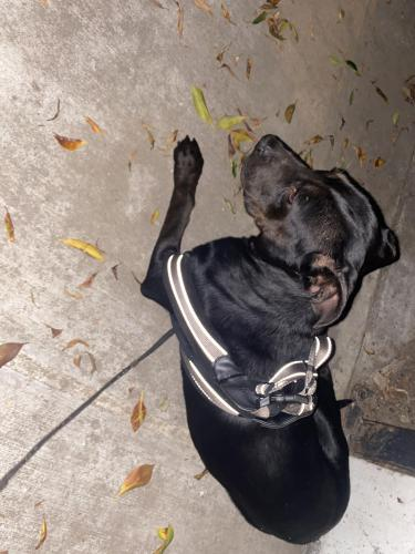 Found/Stray Female Dog last seen 22nd st and Ellendale pl., Los Angeles, CA 90007