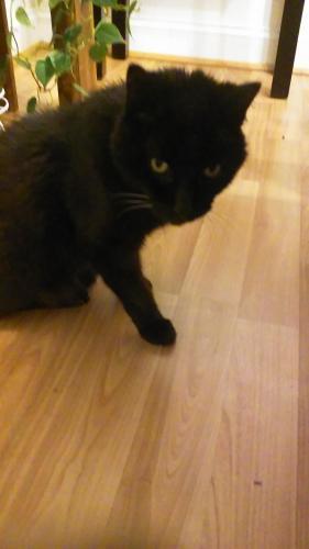 Lost Male Cat last seen Battlefield Blvd and Wayne Drive--Harbor Watch , Chesapeake, VA 23320