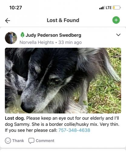 Lost Female Dog last seen Near Johns street , Norfolk, VA 23513