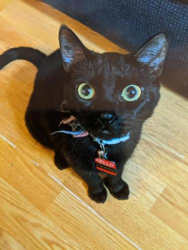 Lost Female Cat last seen Near Ballahack Road, Chesapeake, VA 23322, Chesapeake, VA 23322