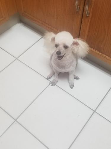 Lost Female Dog last seen Near ave nw 203 la, Carol City, FL 33055