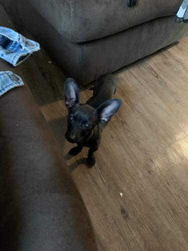 Lost Female Dog last seen Diggs park and clover dale , Norfolk, VA 23523