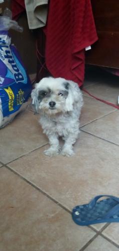 Lost Female Dog last seen Near w cheery Lynn rd Phoenix AZ 85031, Phoenix, AZ 85031