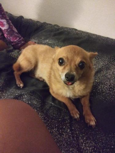Lost Male Dog last seen Policestation, Hilo, HI 96720