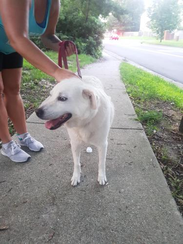 Found/Stray Female Dog last seen Pleasant valley Rd and fountain hall dr, Virginia Beach, VA 22464